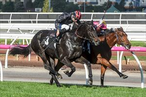 Determined mare hits the mark at Flemington