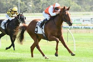 Impressive debut win by Star Witness colt