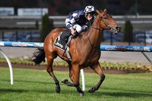 Bullpit aiming to bounce back at Moonee Valley