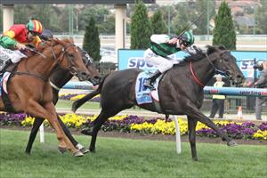 Shamus getting ready for Cox Plate defence