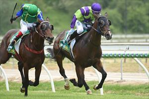 Blinkers do the trick for French Snitzel