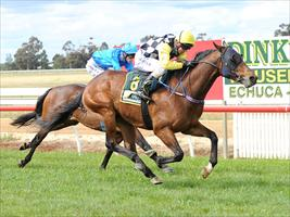 O'Brien out for Blueblood trifecta
