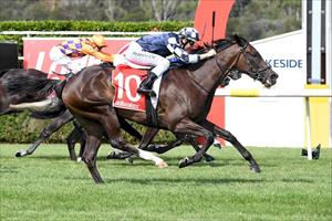 Big goals planned for talented filly