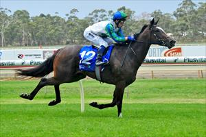 Dream start for Waikato Stud lease package