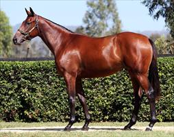 O'Brien finds value at Inglis Sales