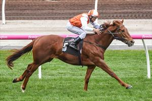 Lycurgus lays down the law with Flemington win