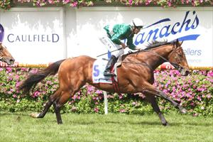 Meethaq to chase Carbine Club
