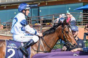 STABLE OAKS AND STAKES DAY PREVIEW