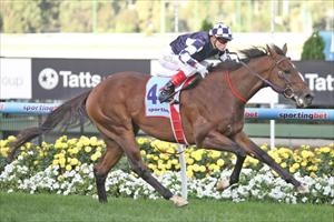 So You Think relation ready for Randwick