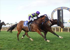 Puncher becoming stable favourite