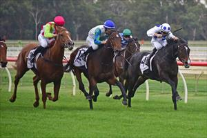 Waikato filly shows resolve to tough out maiden win