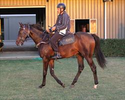 Sebring, O'Reilly, Savabeel & Sepoy Yearling Shares available