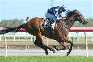 Adelaide Cup trial for Bullet