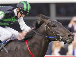 Shamus gearing up for Guineas