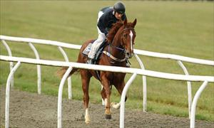 O'Brien wishing upon a Star for sprint double