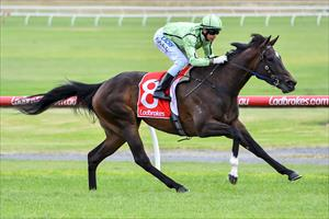 Impressive filly rings city bell for first win