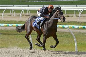 Quality colt burns off rivals on debut