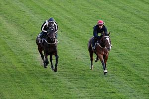 Class colts gallop at Moonee Valley