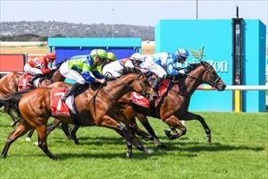 QUEENSLANDER ON THE BOARD FOR NEW STABLE