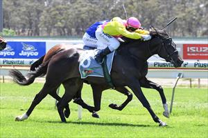 TWO OUT OF THREE FOR ZOUSTAR FILLY