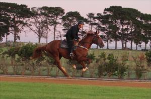 Flemington debut for Circles Of Gold colt