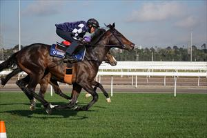 SPRING CONTENDERS: RUSSIAN CAMELOT