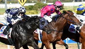 Rose blooms on debut for O'Brien