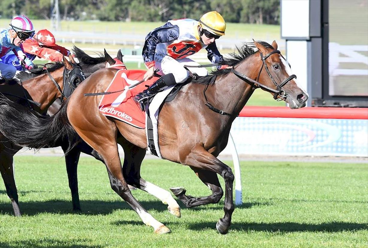 SAFE PASSAGE HIGHLIGHTS LANE DOUBLE
